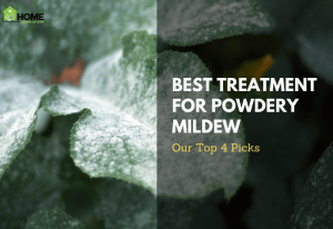 Powdery Mildew Featured IMG