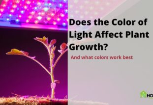 Does the Color of Light Affect Plant Growth?